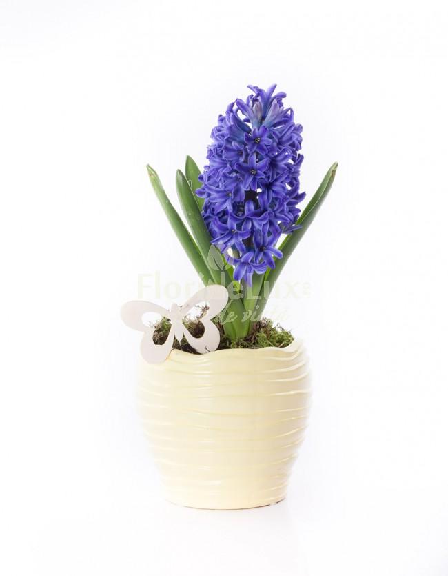 flori pentru 8 martie 2016 zambila