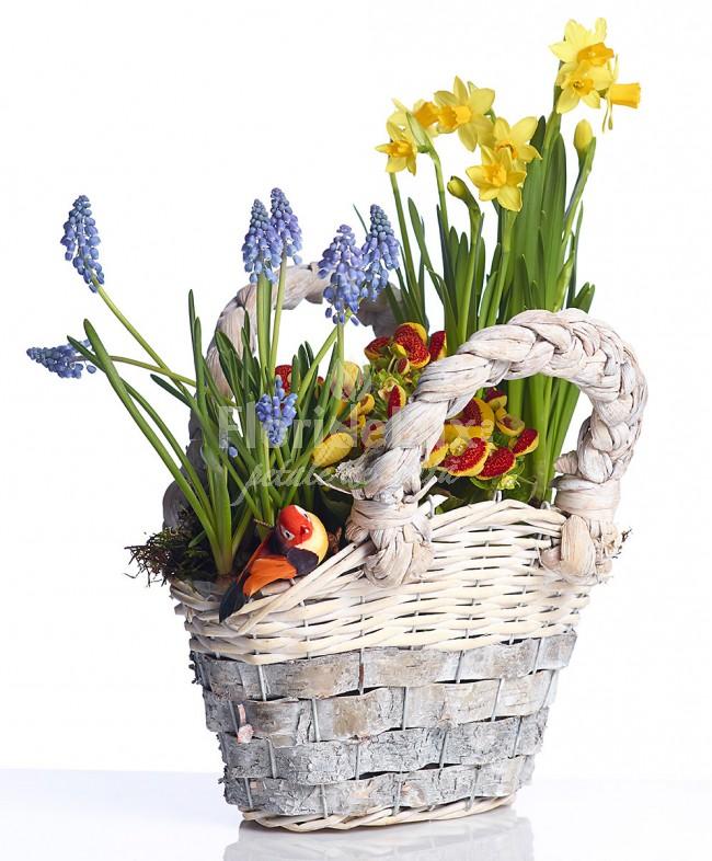 Flori de 8 martie in ghiveci plante