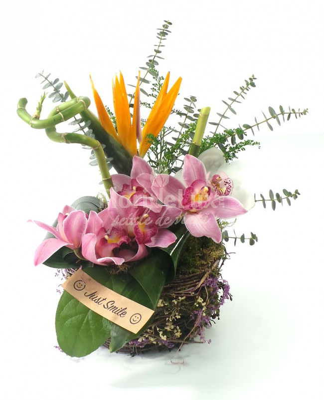 surprize speciale de 8 martie orhidee
