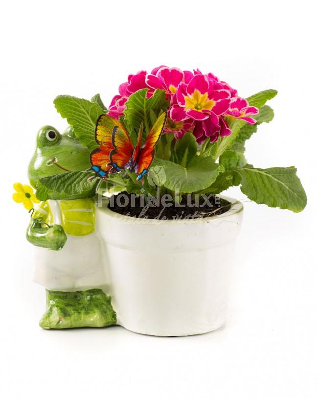 flori-la-ghiveci-8-martie