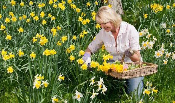 flori in ghiveci de 8 martie
