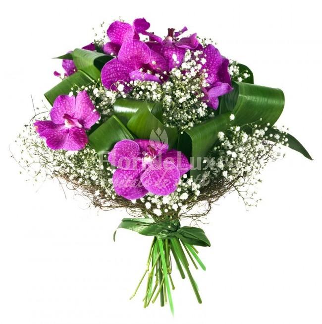 orhidee_superbe