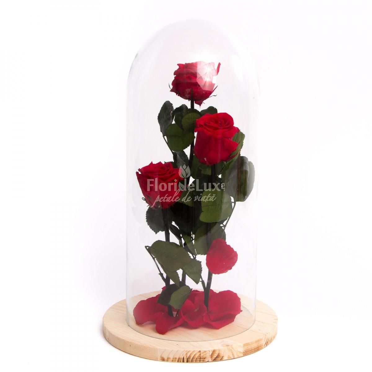 3 trandafiri criogenati in cupola